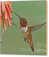 Allens Hummingbird At Flowers Wood Print
