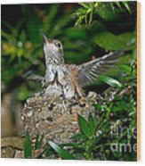 Allens Hummingbird Chicks Wood Print