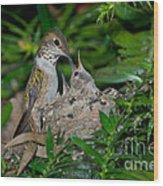 Allens Hummingbird Feeds Young Wood Print