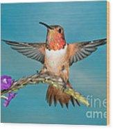 Allens Hummingbird Male Wood Print