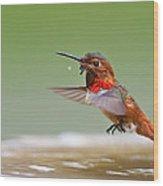 Allen's Hummingbird Wood Print by Thy Bun