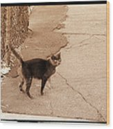 Alley Cat Wood Print