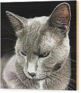 Alley Cat. Wood Print