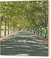 Alley Of Trees On A Summer Day Wood Print