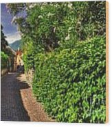 Alley With Green Plants Wood Print