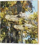 Alligator Bait Wood Print
