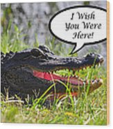 Alligator Greeting Card Wood Print by Al Powell Photography USA