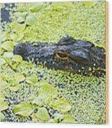 Alligator In Duckweed Looking At Me Wood Print