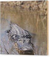 Alligator In Evergrades Wood Print