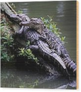 Alligator Mates Wood Print