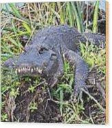 Alligator Overbite Wood Print