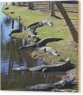 Alligators Beach Wood Print