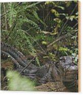 Alligator's Life Wood Print