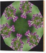 Allium 2 Wood Print