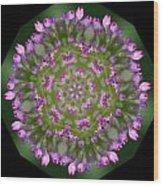 Allium 4 Wood Print