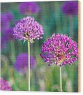 Allium Flowers - Featured 3 Wood Print