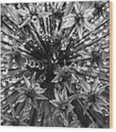 Allium Jewels Wood Print