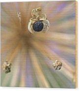 Allium Lucille Ball Seedpod Wood Print