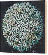 Allium Wood Print by Lynette Yencho