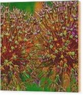 Allium Seeds Wood Print