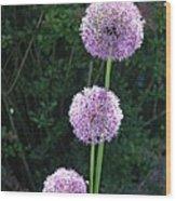 Alliums Wood Print