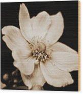 Alluring Anemone Wood Print