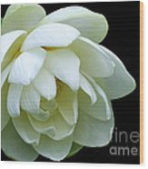 Alluring Lotus Wood Print
