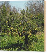 Almanzora Mountain Lemons Winther Spain Wood Print