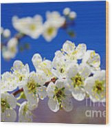 Almond Blossom Wood Print by Carlos Caetano