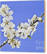 Almond Blossom Wood Print