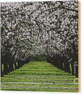 Almond Orchard Wood Print