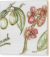 Almond With Flowers Wood Print