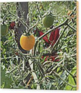 Almost Harvest Time Wood Print