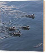Almost Synchronized Swimming  Wood Print