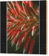 Aloe Bloom Window 3 Wood Print