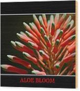 Aloe Bloom Window Wood Print