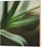 Aloe Wood Print