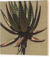 Aloe Ferox Wood Print