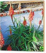 Aloe In Bloom Wood Print