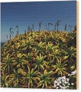 Aloe Is Anyone There Wood Print