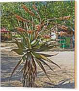 Aloe Plant In Kruger National Park-south Africa Wood Print