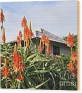 Aloe Vera And Tin Roof Plantation House Wood Print