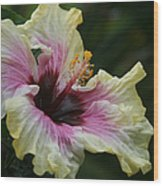Aloha Aloalo Tropical Hibiscus Haiku Maui Hawaii Wood Print