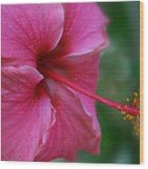 Aloha Aloalo Ulu Wehi Pink Tropical Hibiscus Wilipohaku Hawaii Wood Print