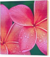 Aloha Hawaii Kalama O Nei Pink Tropical Plumeria Wood Print