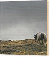 Alone - Wild Horse - Green Mountain - Wyoming Wood Print
