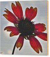 Alone Flower I Mlo Wood Print