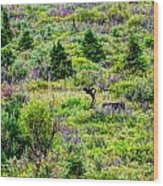 Alone In Grizzly Country Wood Print