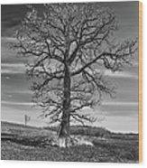Alone In Minnesota Wood Print