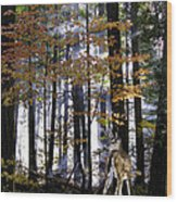 Alone In The Mist Wood Print